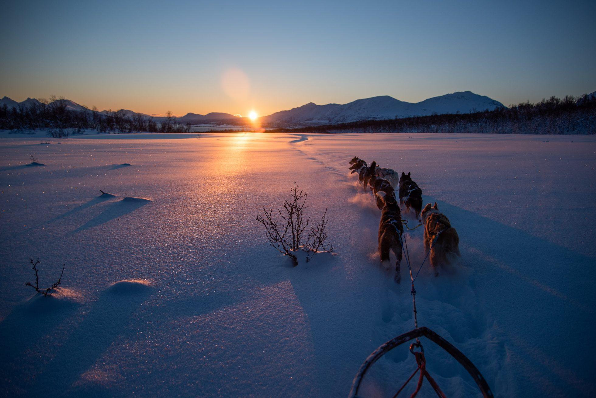 Dog sledding in January polar night is over sun is back in Tromso