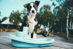 Wilma the puppy sitting in a plastic toy boat