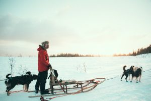 share the sled in pairs, Dog sledding in Norway