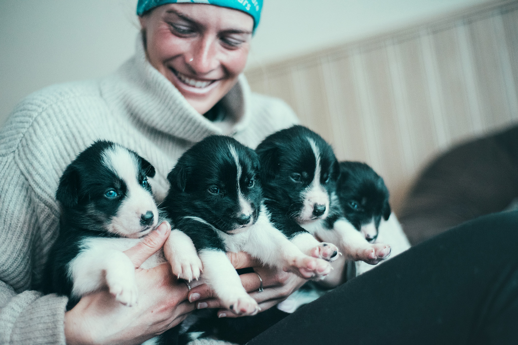 Arctic Adventure Tours Team, puppies