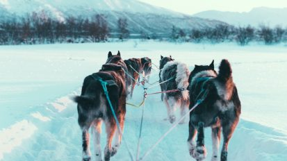 Self-Drive Husky Dog Sledding – Tromsø