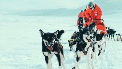 Weeklong Dog Sledding Expedition – Northern Scandinavia