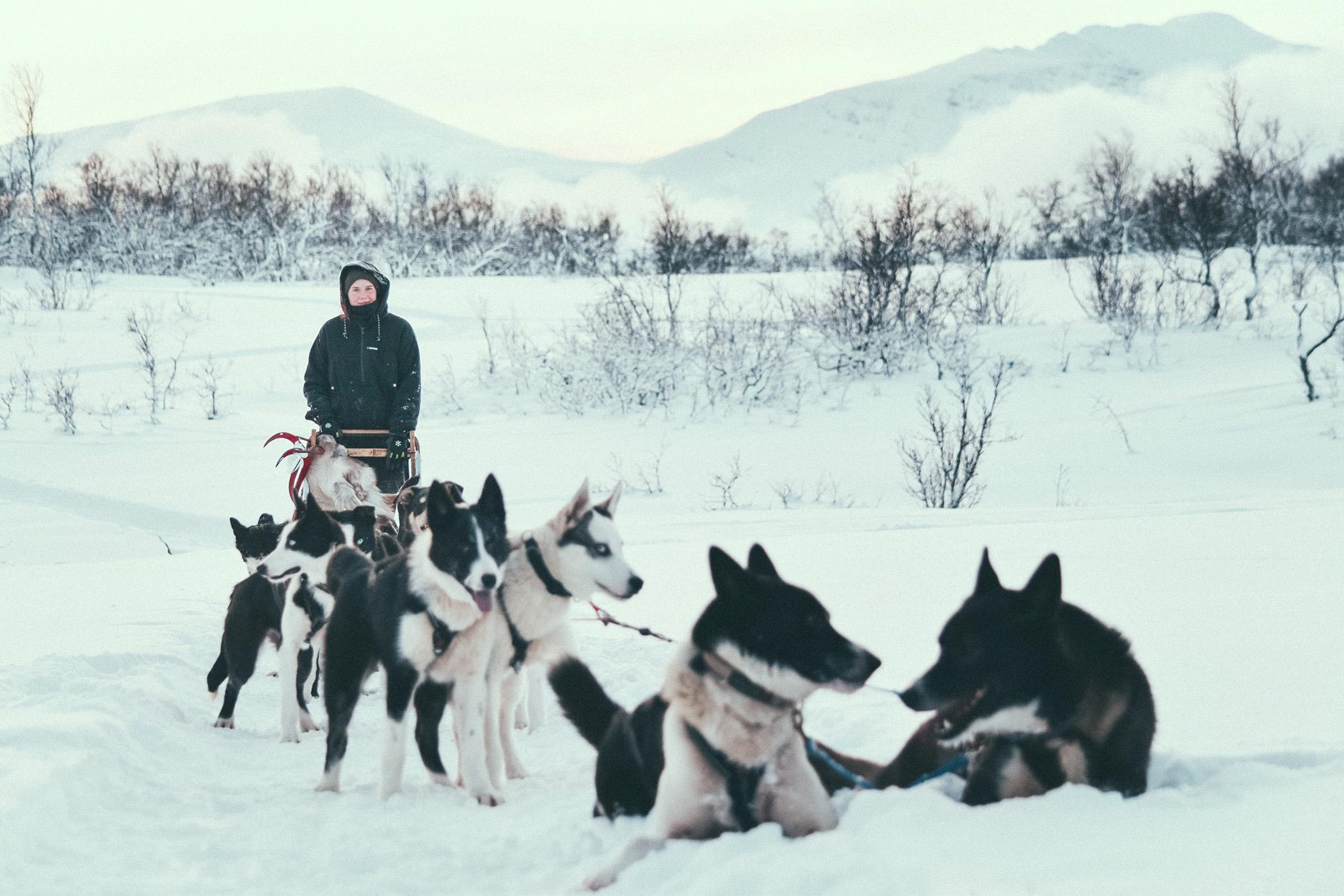 woman in black driving husky dog team