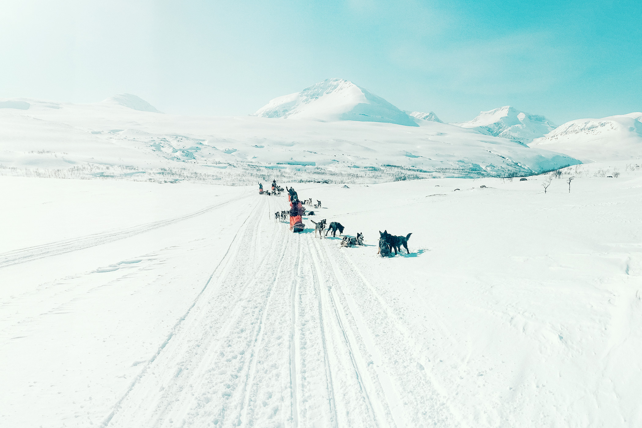musher waving whilst driving dog sled mountain background Northern Norway