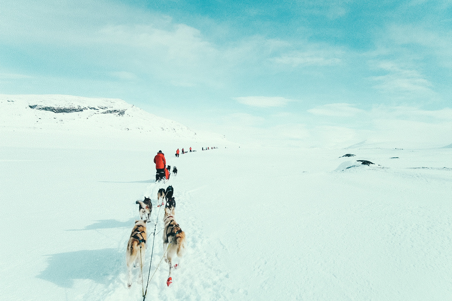 Dog sledding expedition in the Arctic