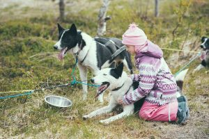 Arctic Adventure Tours, little girl meeting the dogs after a wagon trip
