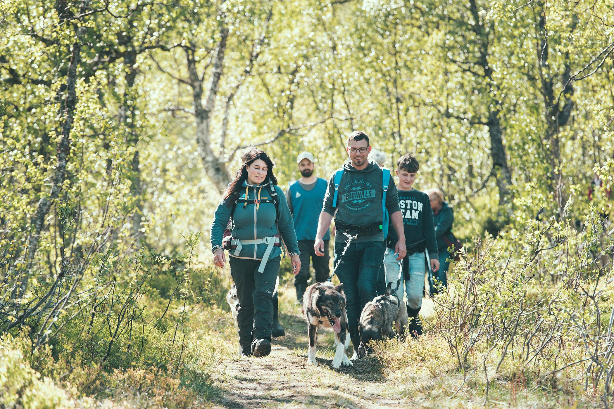 Husky hiking, Kvaløya