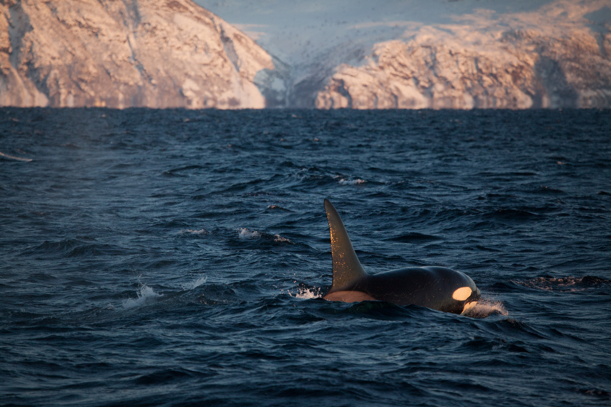 Whale watching, Tromsø