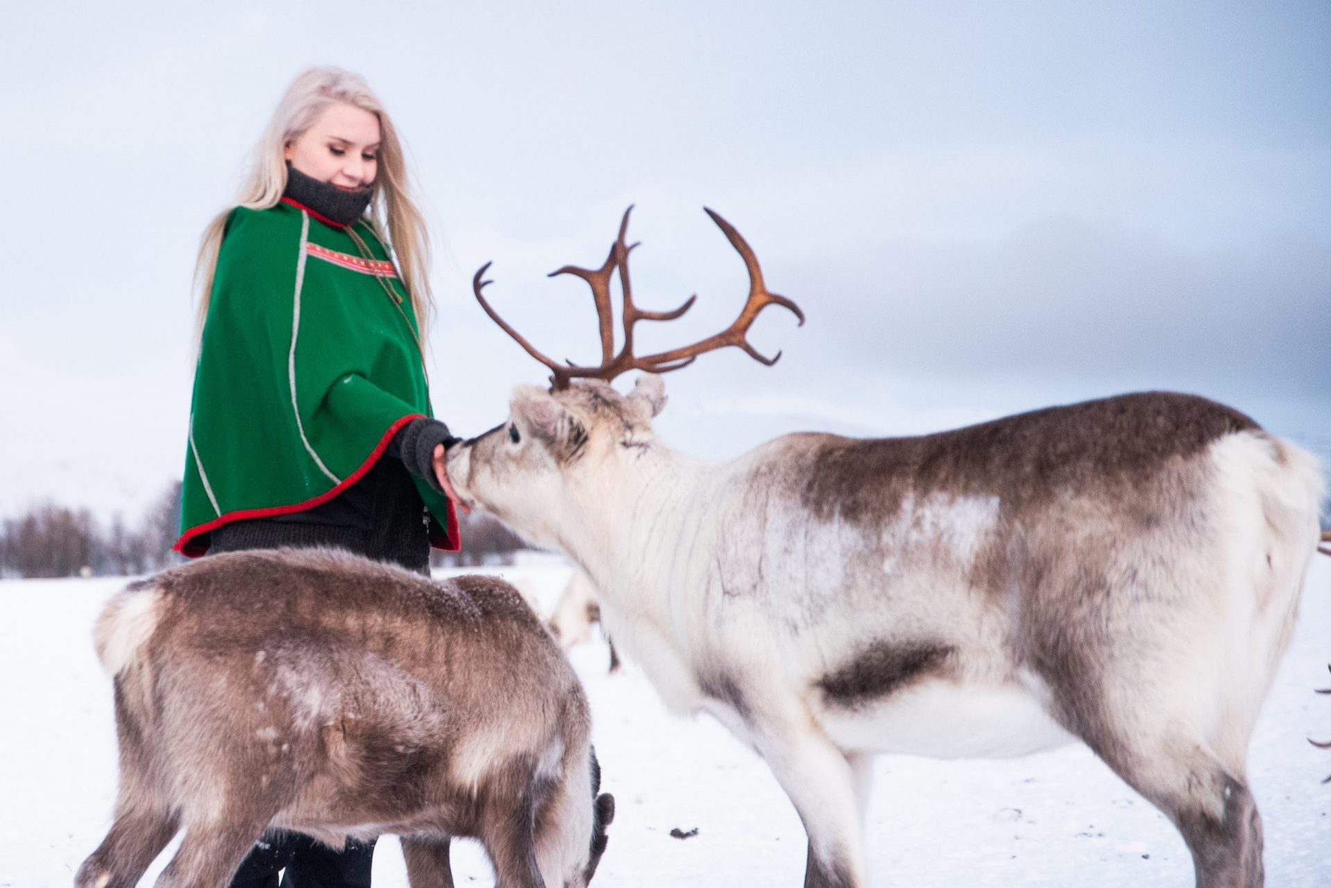 woman in green saami cape feeding reindeer Northern Norway