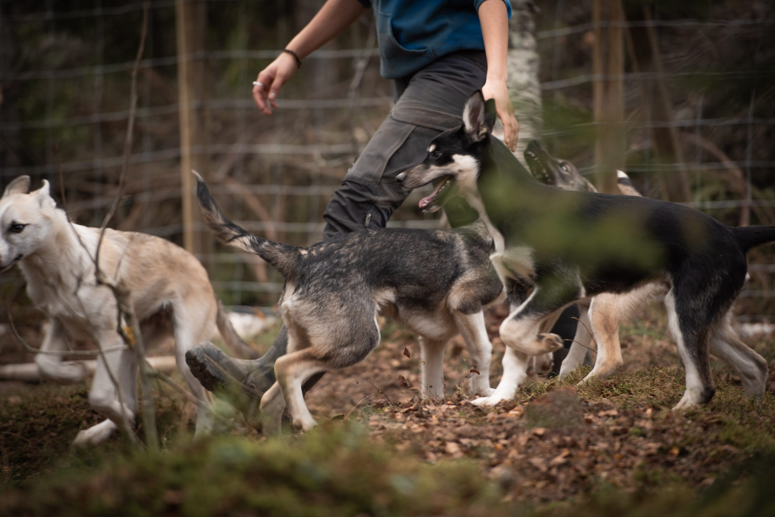 puppies playing in forest
