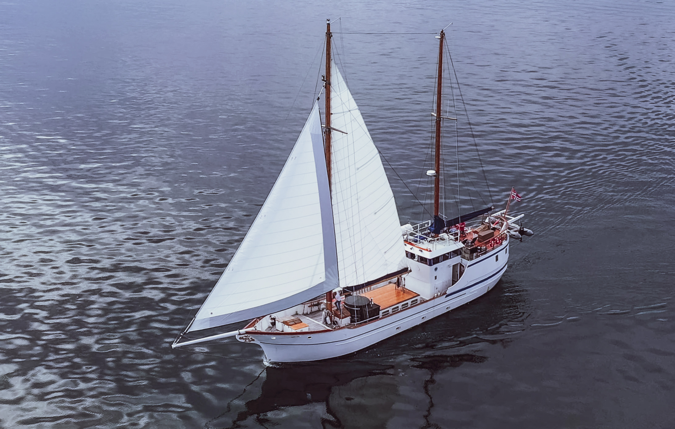 stella oceana sailing boat on whale watching tour tromso