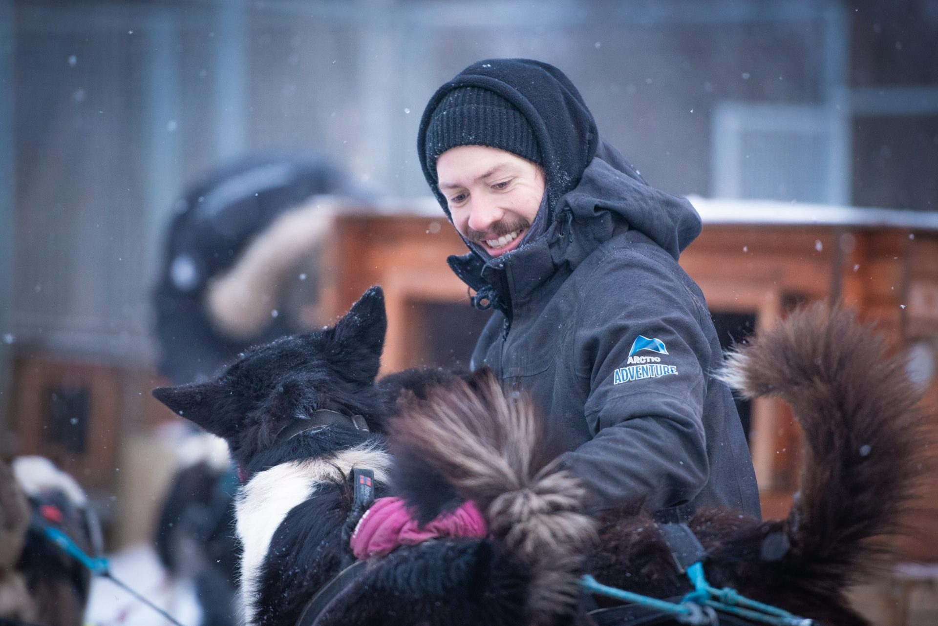 dog handler working with sled dogs at the kennel Tromso