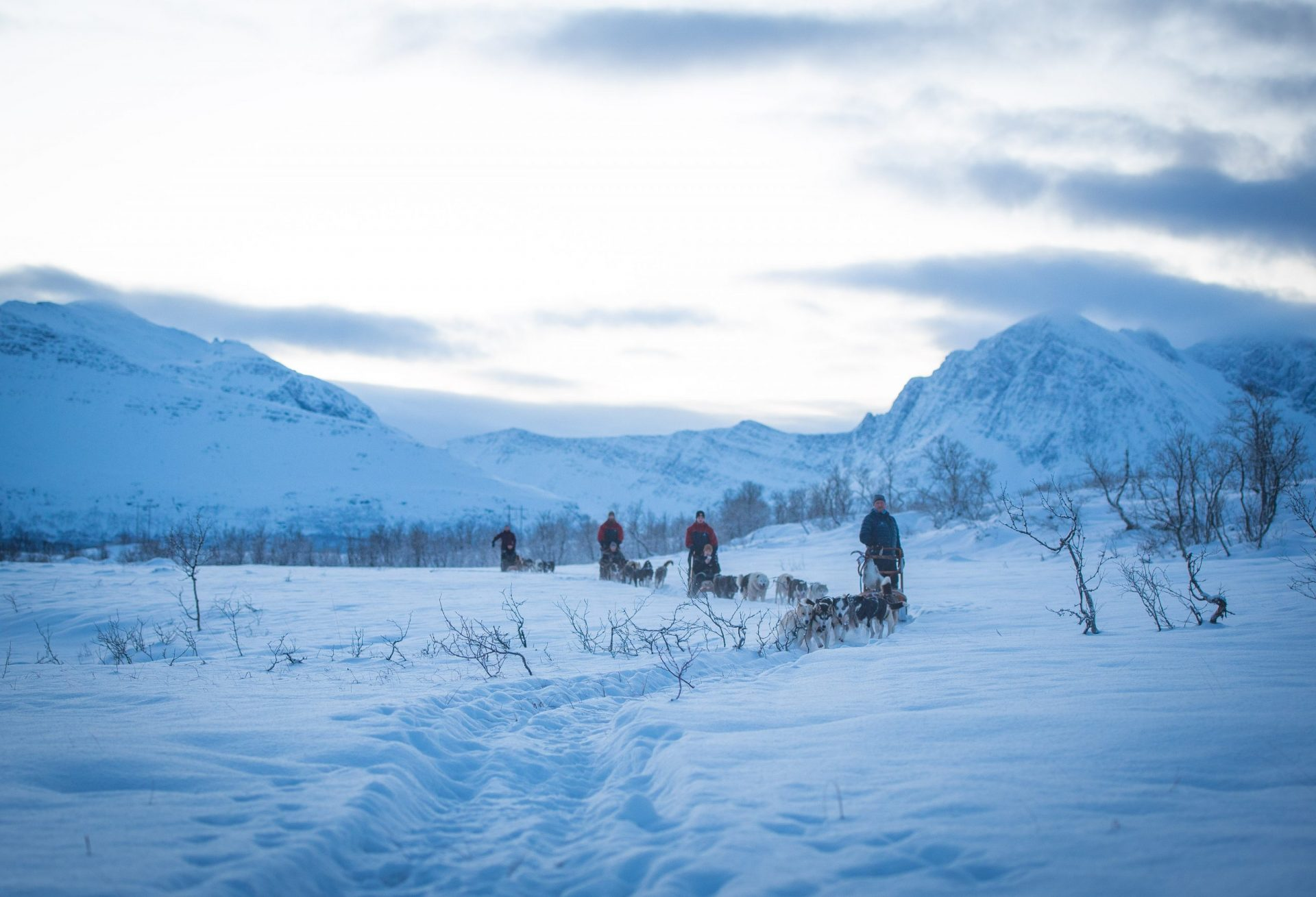 November dog sledding tour in Tromso