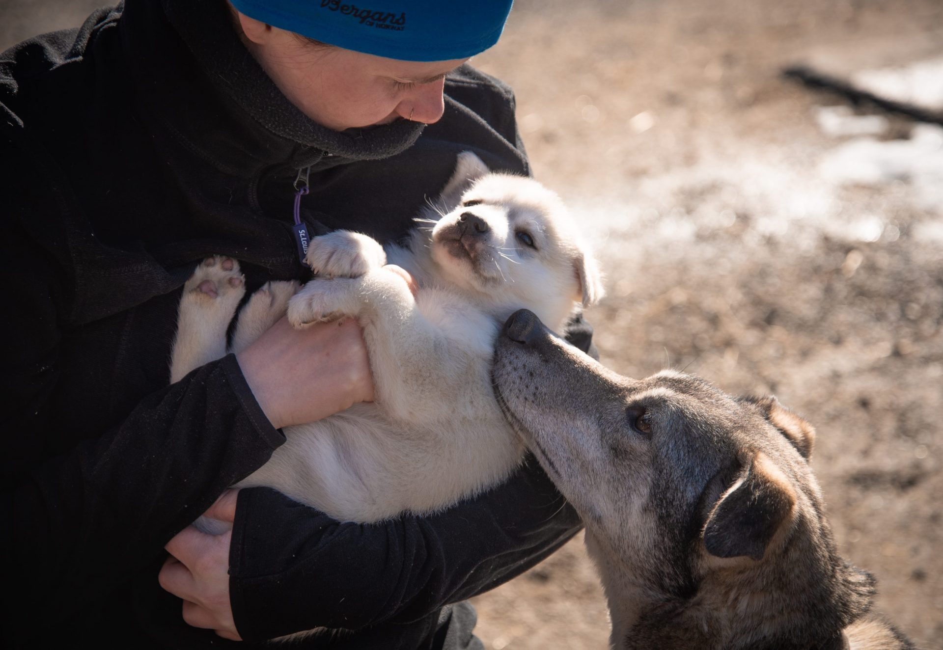 kennel manager cuddling husky puppy with mum