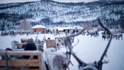 Reindeer Sledding, Feeding and Sami Experience